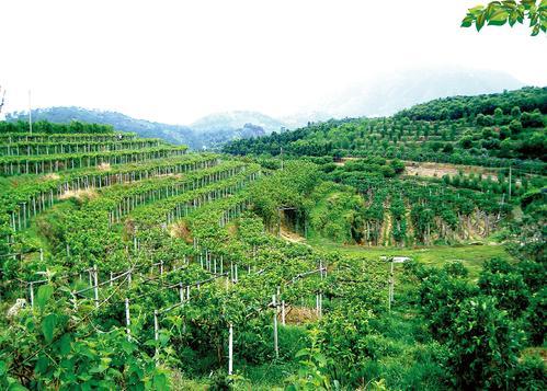 泰国农业大学硕士的可持续农业专业怎么样?